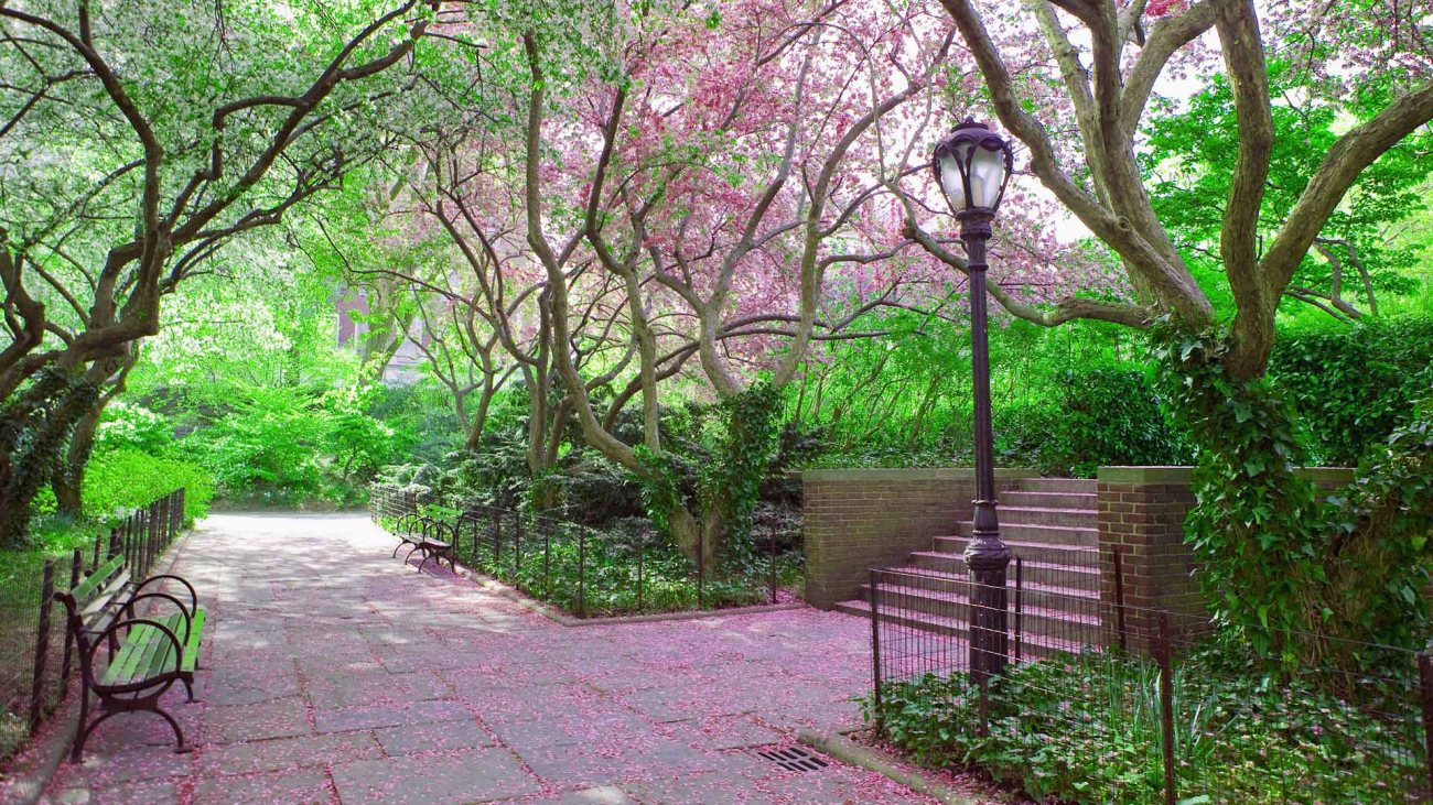 Central Park in the springtime